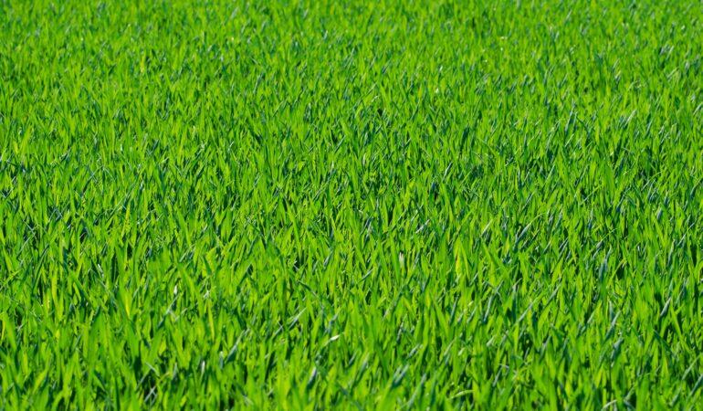 En flot græsplæne er en flot have